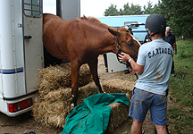 Safety Partition Could Make Small Horseboxes Safer - Horse ...