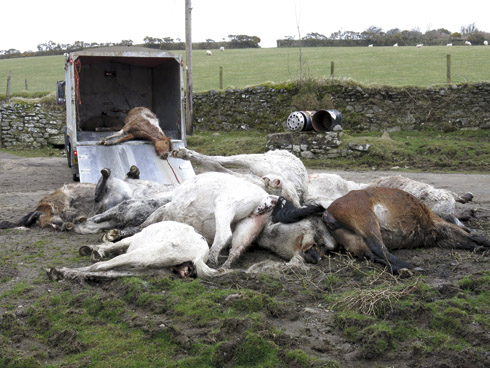 Outcry over dead ponies on Bodmin Moor - Horse & Hound