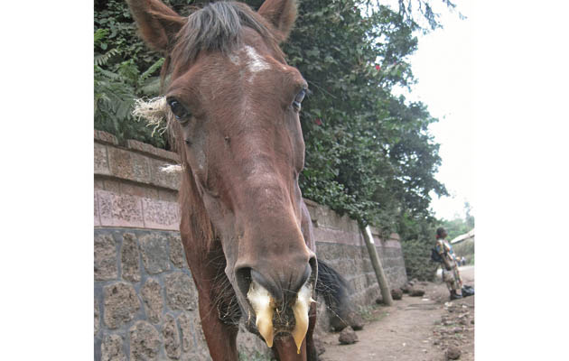 equine diseases Learn about some of the most common horse diseases knowledge is key to prevention.