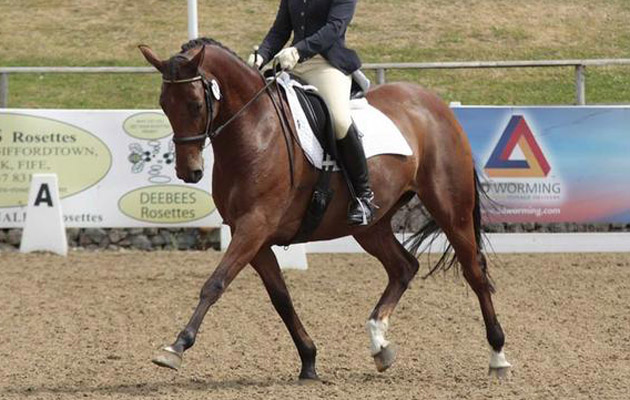12 Dream Dressage Horses For Sale Pics Horse Amp Hound