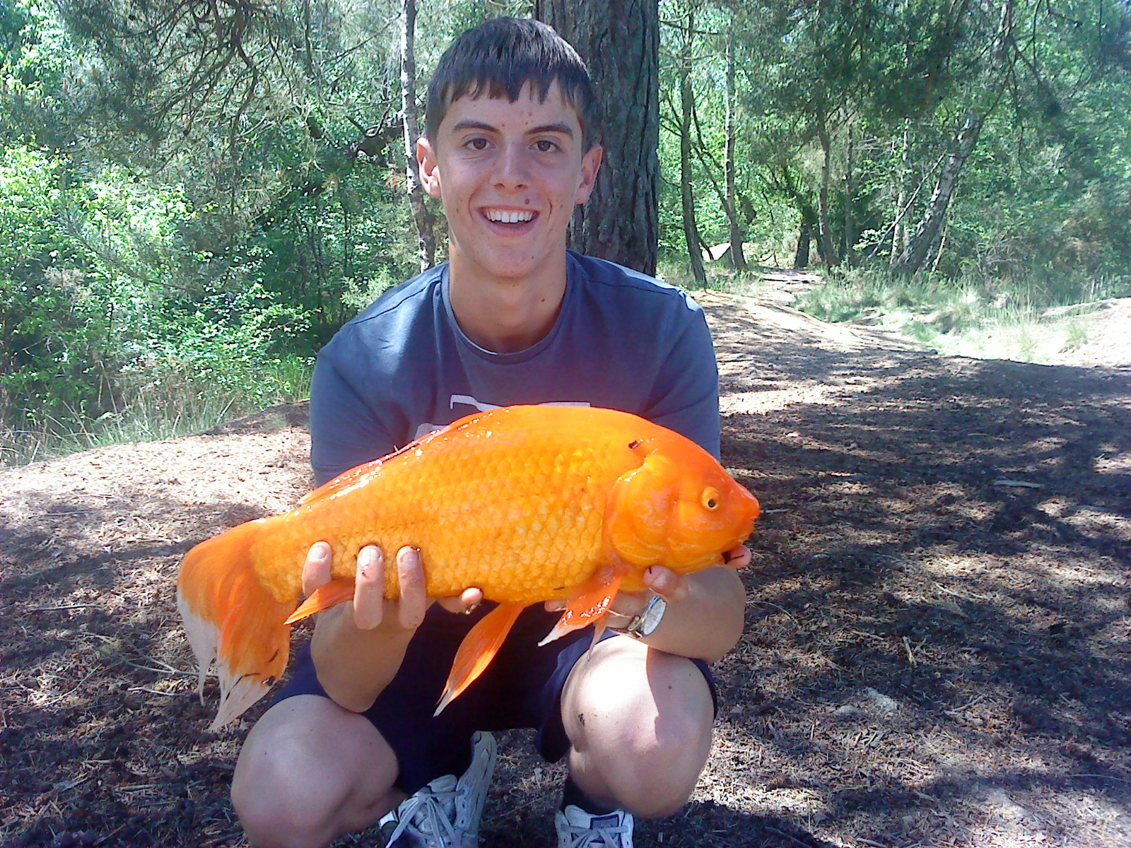 Record orange goldfish makes headlines angler 39 s mail for Giant coy fish