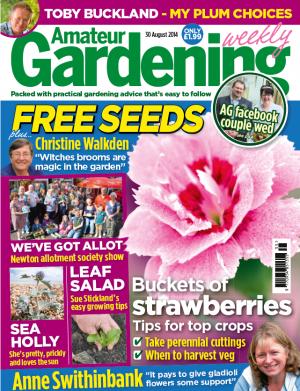 Amateur Gardening 30th Aug