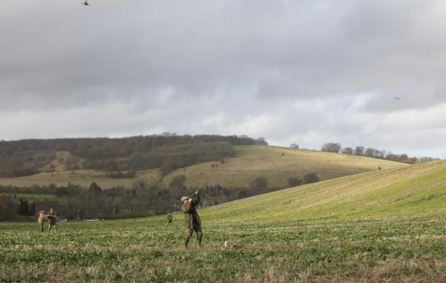 Pheasant shooting tips for a most enjoyable season