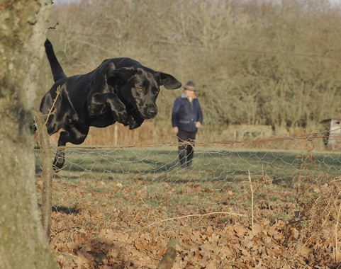 Gundog training stop whistle