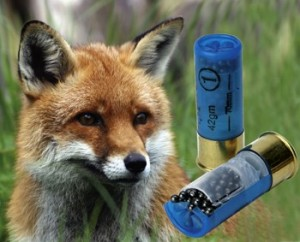 fox cartridges.jpg