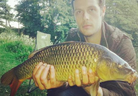 Common carp: Golden beauty with Red tail