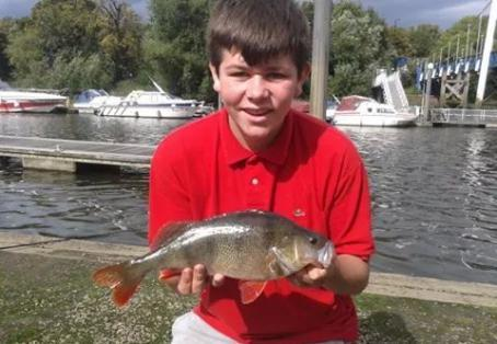 Perch: unexpected perch caught on livebait