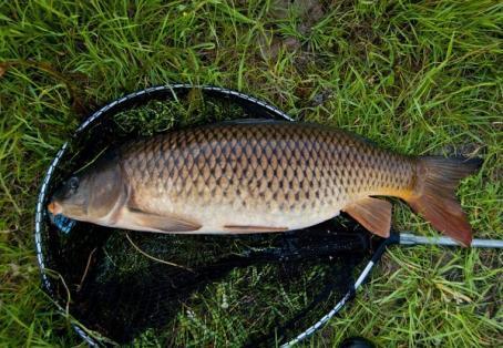 Common carp: Young anglers PB