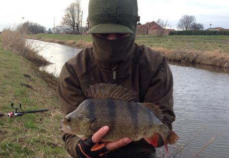 Perch: New pb perch