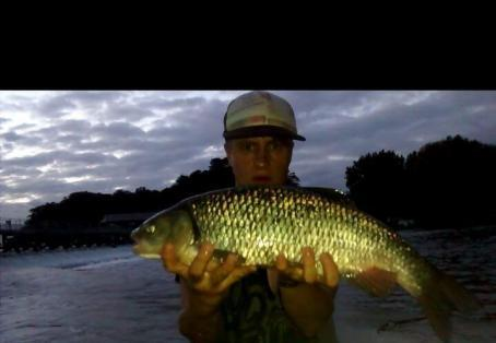 Chub: London city angler
