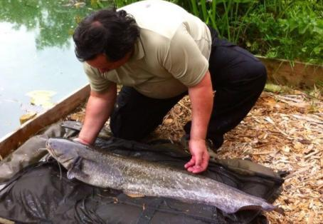 wels catfish: my first catfish in day light caught at 09.30