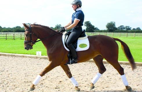 Record Dressage Score For Eventer Ruth Edge Horse Amp Hound