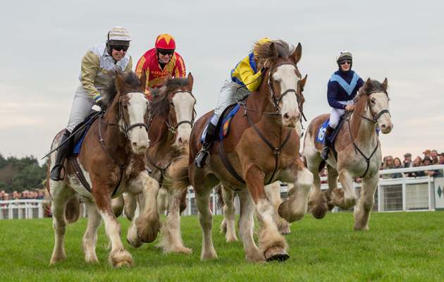 Clydesdales And Dartmoor Hill Ponies Showcase Their Speed