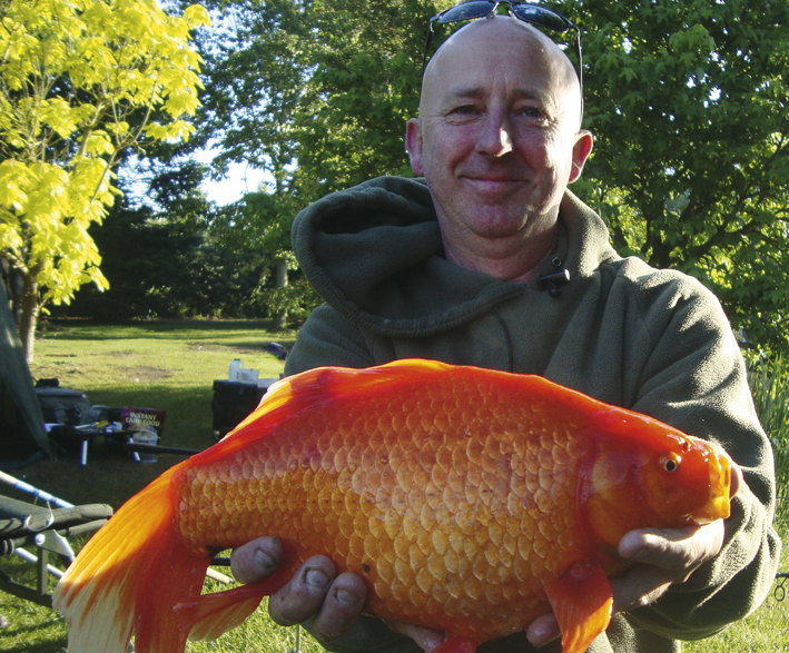 Biggest gold fish ever caught