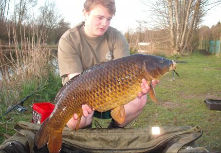 Common carp: What a beautiful common!