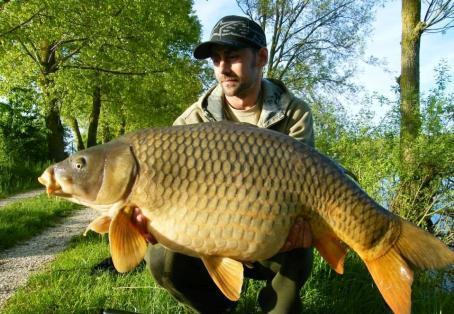Common carp: lovely shaped common