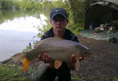 Common carp: 10 lb common in mint condition