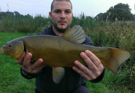 Tench: Good example of this beautiful species