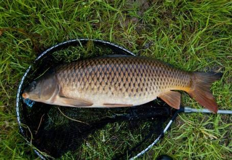 Common carp: Young anglers PB