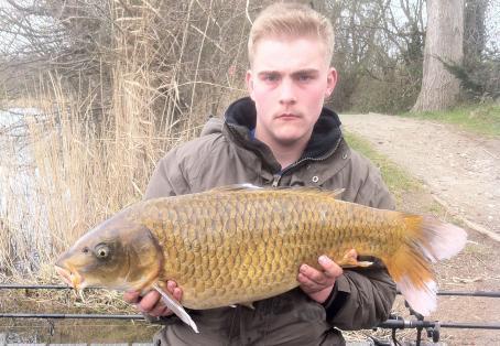 Koi carp: Nice fish we call white fin