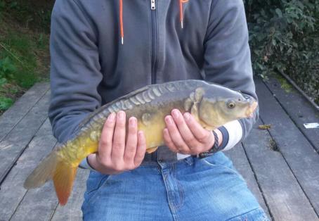 Mirror carp: Caught my first ever fish