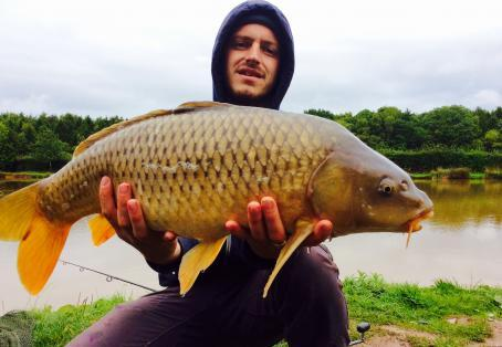 Common carp: Kingsnordley Fishery
