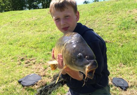 Mirror carp: Golden hill mirror