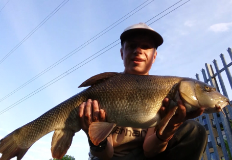 Barbel:  An old warrior from a London river